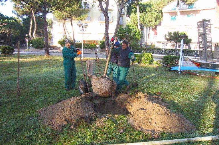 Ufficio Verde Cervia : Ravenna immobili casa camera verde a ravenna mitula case